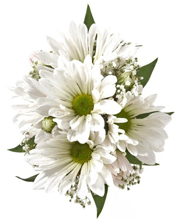 Daisy corsage white royers flowers and gifts flowers plants daisy corsage white mightylinksfo