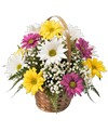 A petite 5in  basket is designed all around with daisy poms and babies breath. 10in H x 10in D