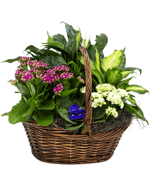 European Plant Basket #859